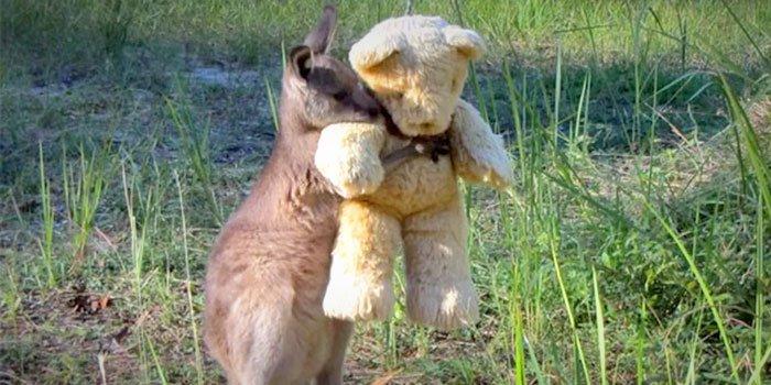 nurture-hugs.jpg